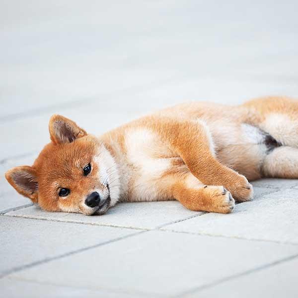 Pflastersteine auf dem ein Hund liegt